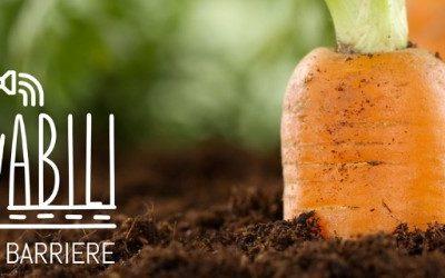 """Prosegue il progetto """"ColtivAbili – Orti senza barriere"""", grazie alle vostre donazioni e al cofinanziamento della Fondazione CR Firenze"""
